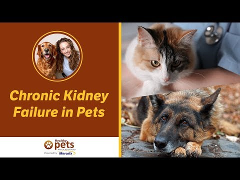 Dr. becker discusses chronic kidney failure in pets