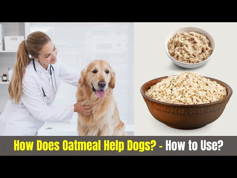 How does oatmeal help dogs? (safe serving ideas)