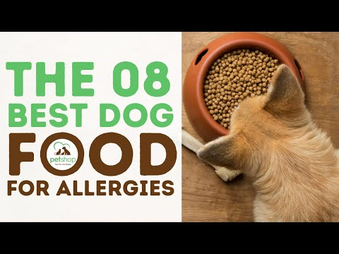 The best dog food for allergies guide and reviews