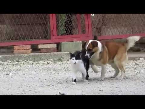 [funny video] dog breed with cat