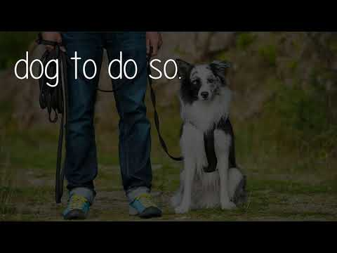 How can you train your dog to attack on command?