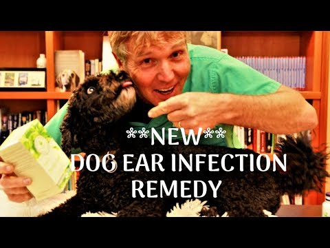 Itchy dog ears? try this..