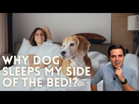 Why does my dog sleep on my side of the bed? // dog sleeping position meaning