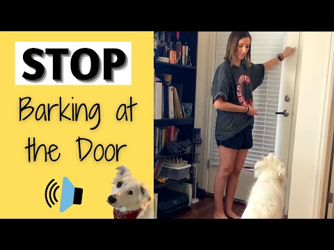 How to get your dog to stop barking at the door