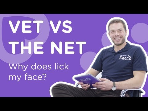 Why does my dog lick my face? - vet vs the net