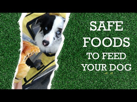 10 human foods that are safe for your dog
