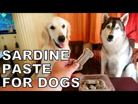 Sardines for dogs | fish paste