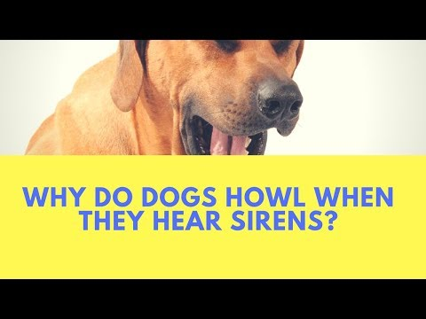 Why do dogs howl when they hear sirens?