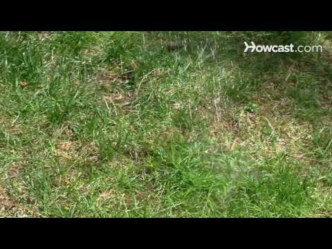 How to rid your grass of dog urine spots