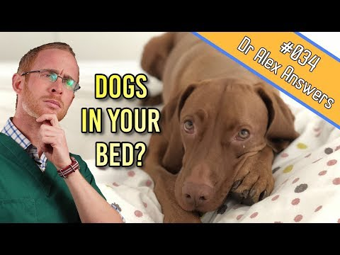 Should your dog sleep with you in bed (under the covers)? - dog health vet advice