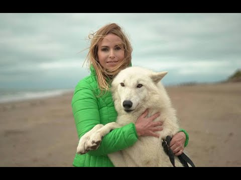 Walking with wolves - rescued wolfdogs